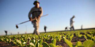 Una PAC nemica del Green Deal