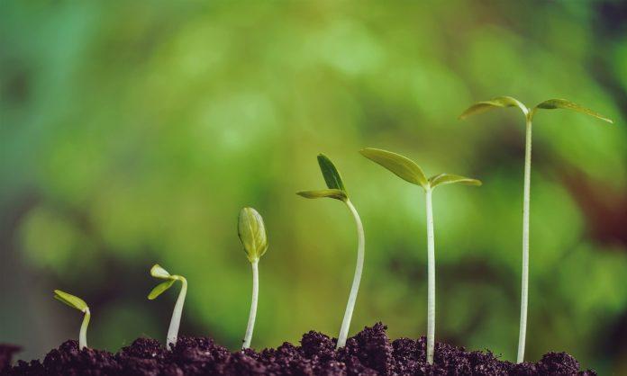 Ecologica.online: un portale ecologista per dialogare con i giovani