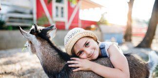 L'animalismo come cultura del rispetto