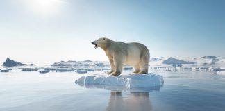 Gli orsi polari sono salvi!