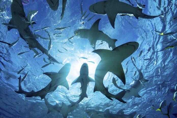 È strage di squali e razze