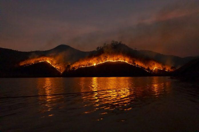 Incendi australiani: 49