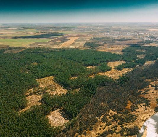 L'Europa è il secondo importatore di deforestazione al mondo