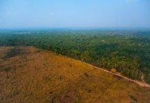 Stiamo consumando le foreste tropicali