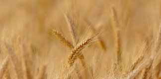 Agricoltura biologica: una scelta sostenibile