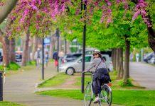 In Francia 2.500 euro se rottami un'auto per una bici
