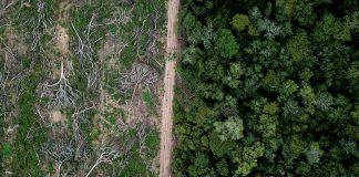 L'Amazzonia si sta trasformando in
