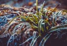 Il riscaldamento globale gela il mese di aprile