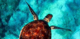 Tartalove: salviamo il mare e i suoi abitanti