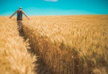 Multimprenditorialità e multifunzionalità nell'agricoltura