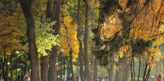 Poco verde nella città italiane: solo