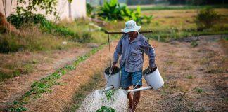 La responsabilità degli agricoltori
