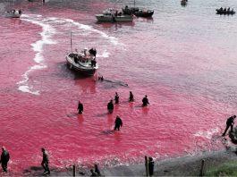 Alle Isole Faroe massacrati quasi