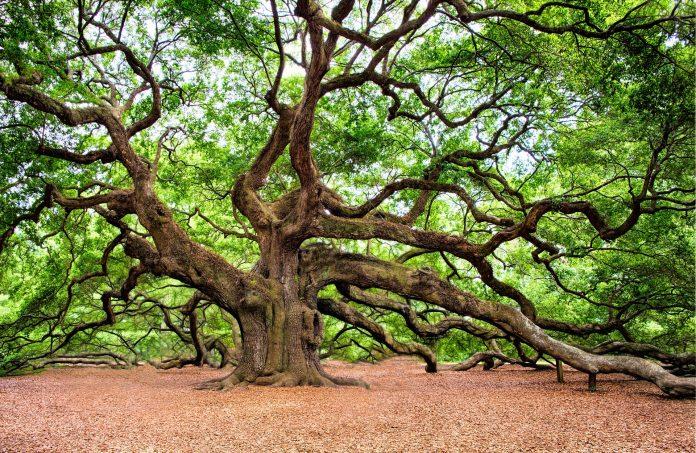 17.500 specie di alberi sono a rischio estinzione
