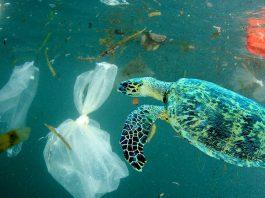 Quanto costa la plastica ad ambiente