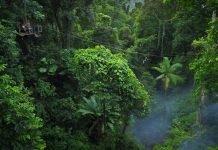 La foresta tropicale più antica al